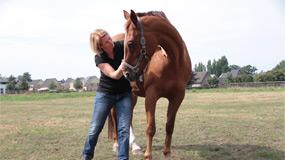behandeling paardenosteopaat
