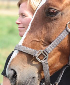 paardenosteopathie