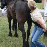Paard & Plezier 2014