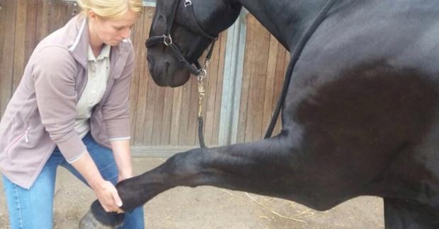 """""""Mijn paard is zichzelf niet meer"""" – De invloed van organen op gedrag"""